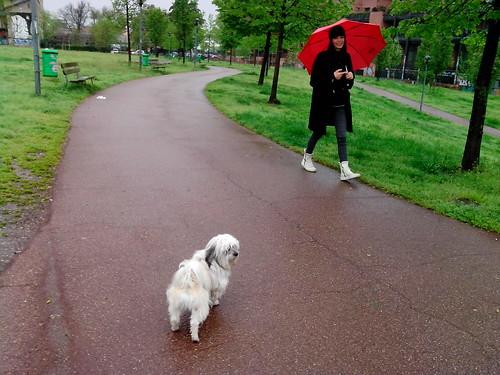 Il cagnolino Kiwi sotto la pioggia by Ylbert Durishti