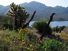 Spring Desert View