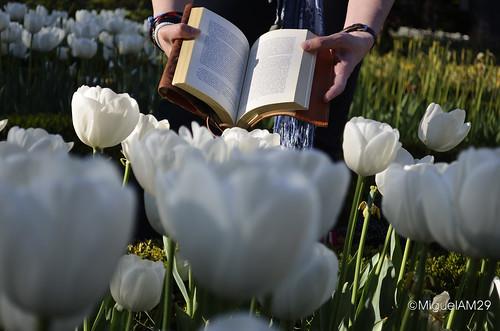 Libro abierto entre las flores