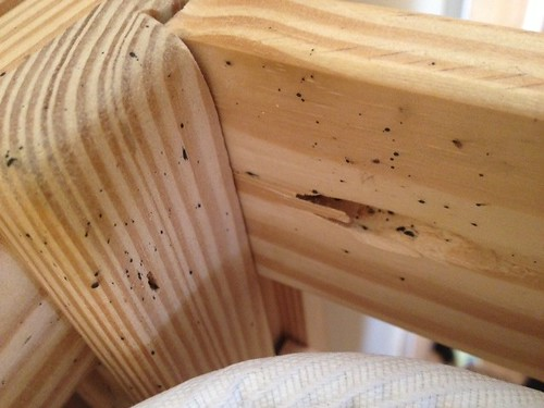 Bed Bug Droppings On Wood