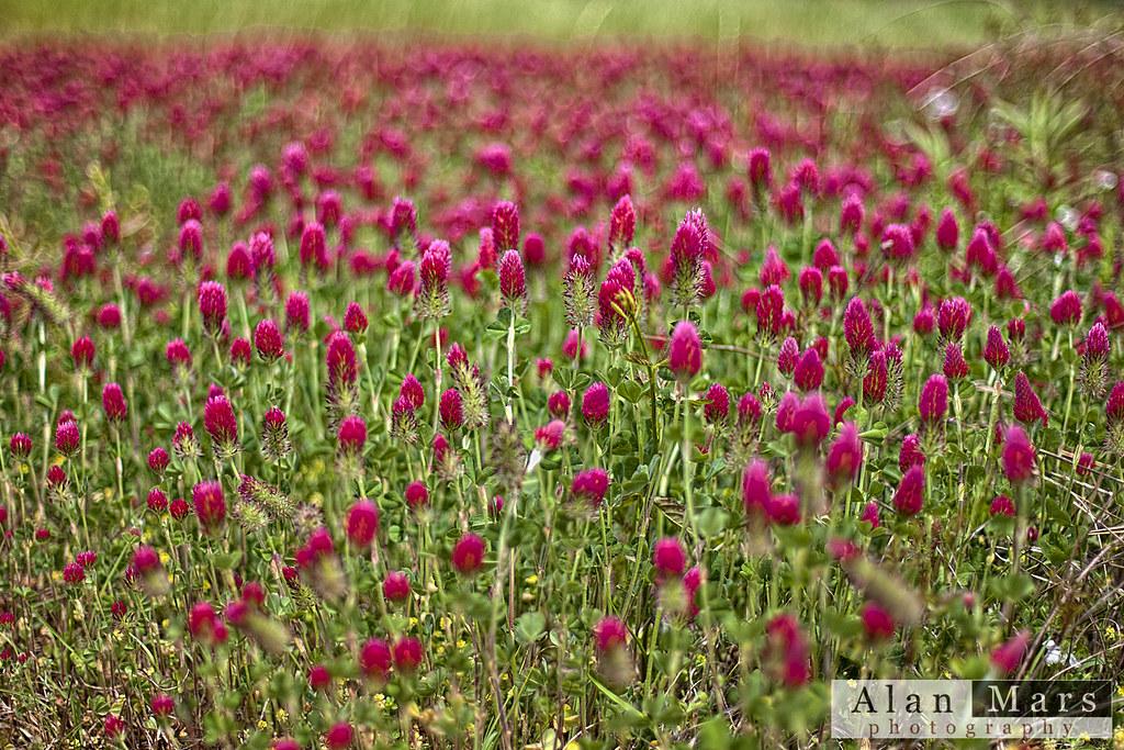IMAGE: http://farm9.staticflickr.com/8520/8679216663_01a401ba4f_b.jpg