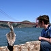 Pelican and me by Howard_Pulling