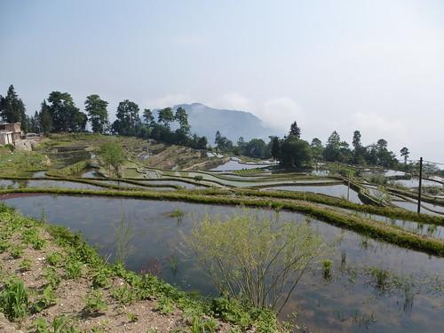 Yunnan13-Yuanyang 6 (1)