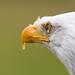 Eagle by Click U