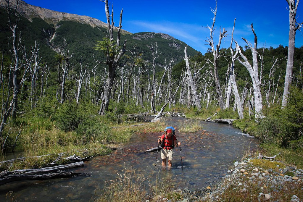 Hiking through a drowned forrest, Reserva Nacional Lago Palena, Chilean Patagonia