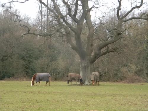 Horses round a tree 2