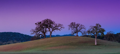 california trees color sunrise landscape dawn glow hills centralcoast oaks templeton winecountry pasorobles sanluisobispocounty mfcc highway46 landscapedreams treesdiestandingup vineyardroad