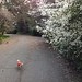 Late Feb Walk with the Pups by fraying