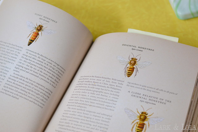The Beekeeper's Bible - bees