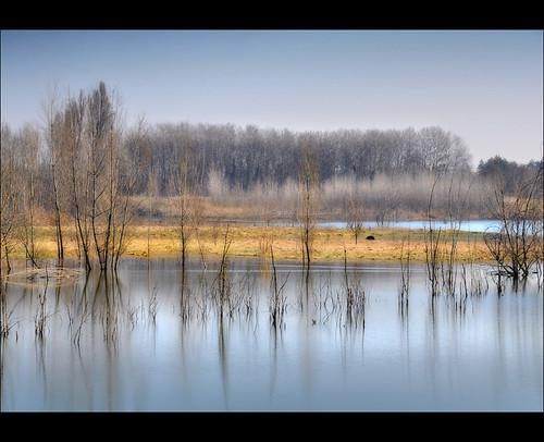 alberi nikon inverno cava paesaggio d90 2485 stagni marzioiotti