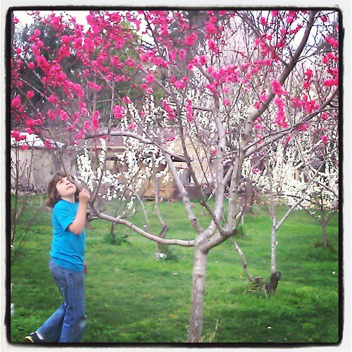Lucas in the school orchard #waldorf #spring