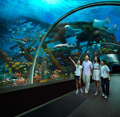 sea aquarium sentosa singapore review