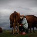 A Mongolian herder milks her cows in the late afternoon. The size of the livestock holdings of most families, particularly newcomers who have migrated from urban centers, is well below the subsistence level. For a sustainable livelihood over the long term, a family of herders needs at least 10 heads of cattle or yak or 70 sheep. Yet when livestock collectives were disbanded in the early 1990s, about 20 percent of families, many of them headed by women, received fewer than 10 animals. (U.S. Air Force photo/Master Sgt. Jeremy T. Lock)