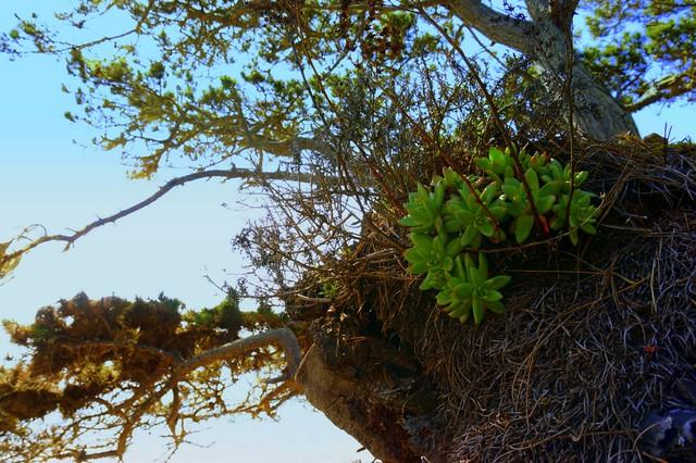 DSC00619-001 Grace Rock Trail - Succulents