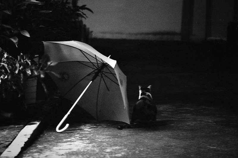 Umbrella and Cat
