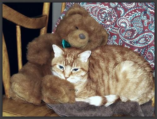Snuggle Buddy by cherithsky