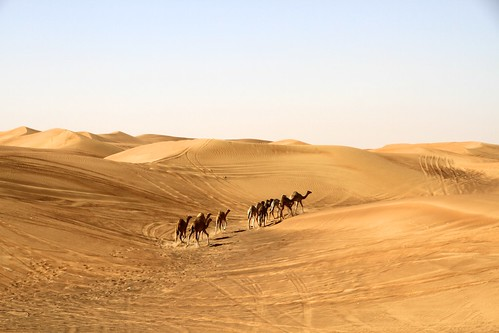 day desert clear camels deserto cammelli emiratiarabi mygearandme rememberthatmomentlevel4 rememberthatmomentlevel1 rememberthatmomentlevel2 rememberthatmomentlevel3 rememberthatmomentlevel9 rememberthatmomentlevel5 rememberthatmomentlevel6 rememberthatmomentlevel10