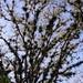 Bromeliads in trees- Bromelias en árboles; entre Santa María Temaxcalapan y Villa Alta, Región Sierra Juárez, Oaxaca, Mexico por Lon&Queta