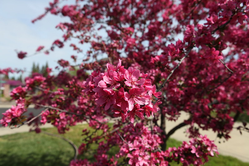 spring flower_032