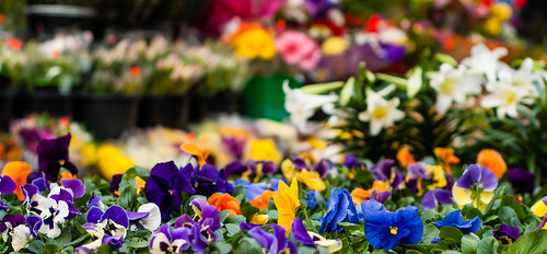 The Redpath flower stall in Spring - #87/365 by PJMixer