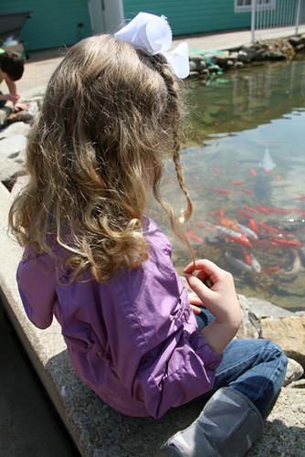 Aut-Looking-at-Fish
