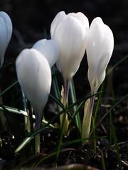 土, 2013-03-30 10:32 - ブルックリン植物園