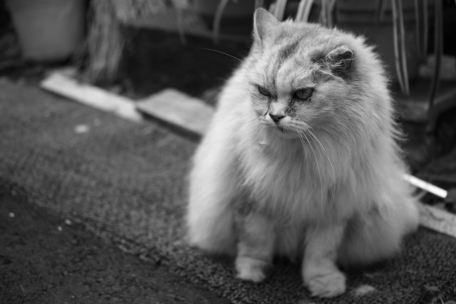 20130331_02_Monochrome Cat
