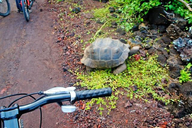 Roadblock! Galapagos