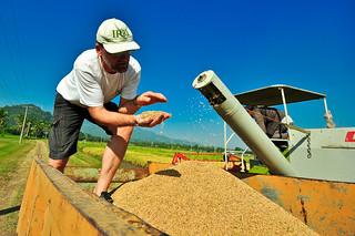 Achim Dobermann on IRRI Agronomy Challenge