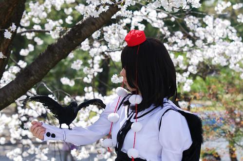2013 鶴舞公園 花見(2013 Tsuruma Park)