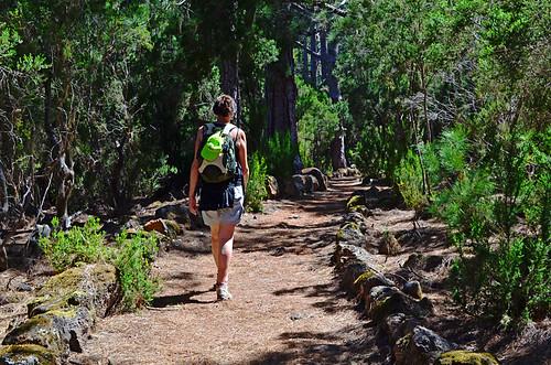 Walking in the pines, La Orotava,Tenerife