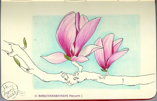 2013_04_11_magnolia_01_s by blue_belta