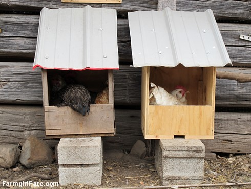 Cluck cute (5) Three's company in the nesting boxes - FarmgirlFare.com