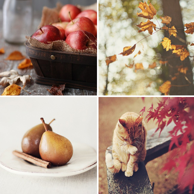Pinterest Picks Autumn