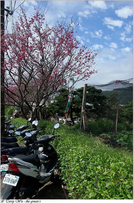 2013-02-03 平菁街