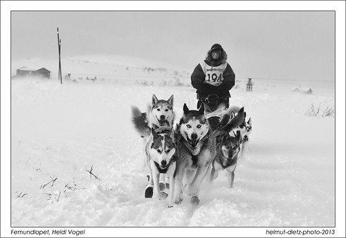 Femundlopet, Heidi Vogel, Røros Storwartz - helmut-dietz-sled-dog-photo-2013