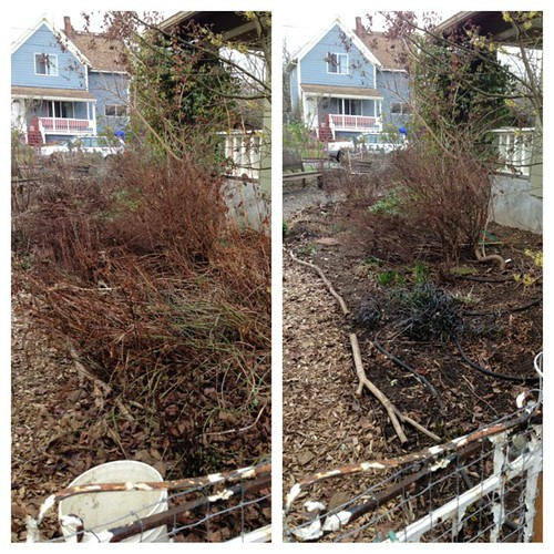 Spring clean up in the garden this weekend, before and after. This is one of about 8 beds we cleaned up. #gardening