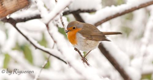 Mir nella neve