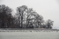 Birds On Ice / Vienna, Austria (2013)