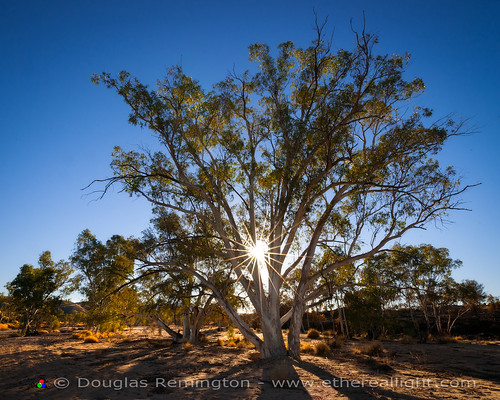 Larapinta Sunstar by Douglas Remington - Ethereal Light® Photography