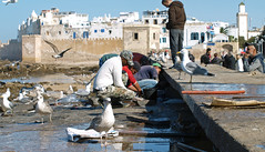 fishermen in Essaouira