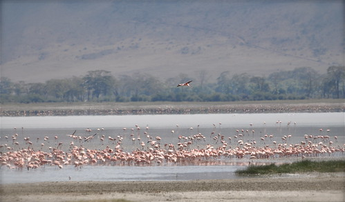 africa lake nature birds landscape tanzania view wildlife flamingos unescoworldheritagesite crater vista ngorongorocrater eastafrica ngorongoroconsevationarea