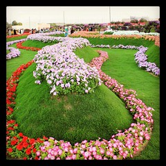 Wonderland?  #colors #instauae #instapic #flowers #landscape #garden #dubai