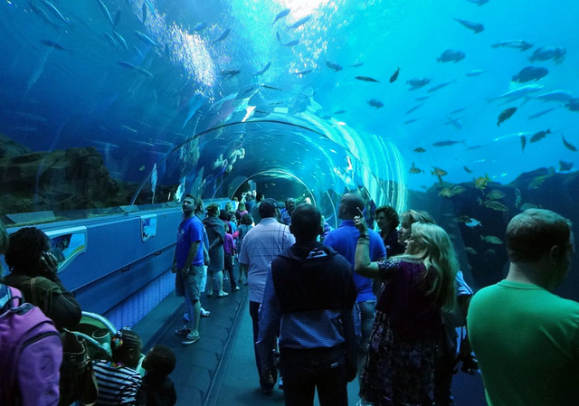 atlanta aquarium tunnel