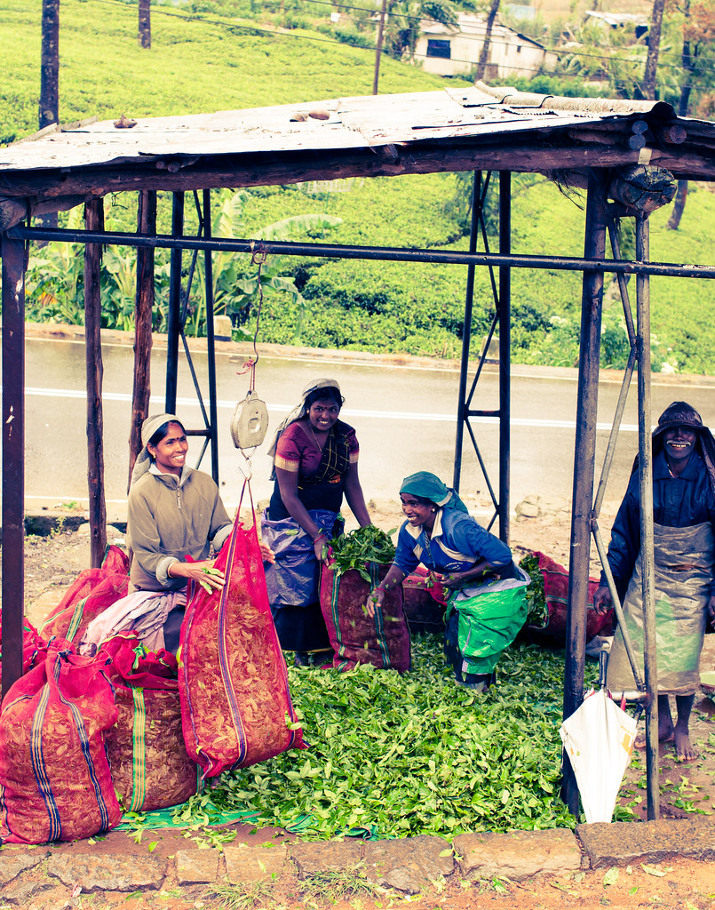 Tamil Tea Workers - Sri Lanka