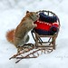 Have some fun on National Squirrel Appreciation Day! But stay warm! by Nancy Rose
