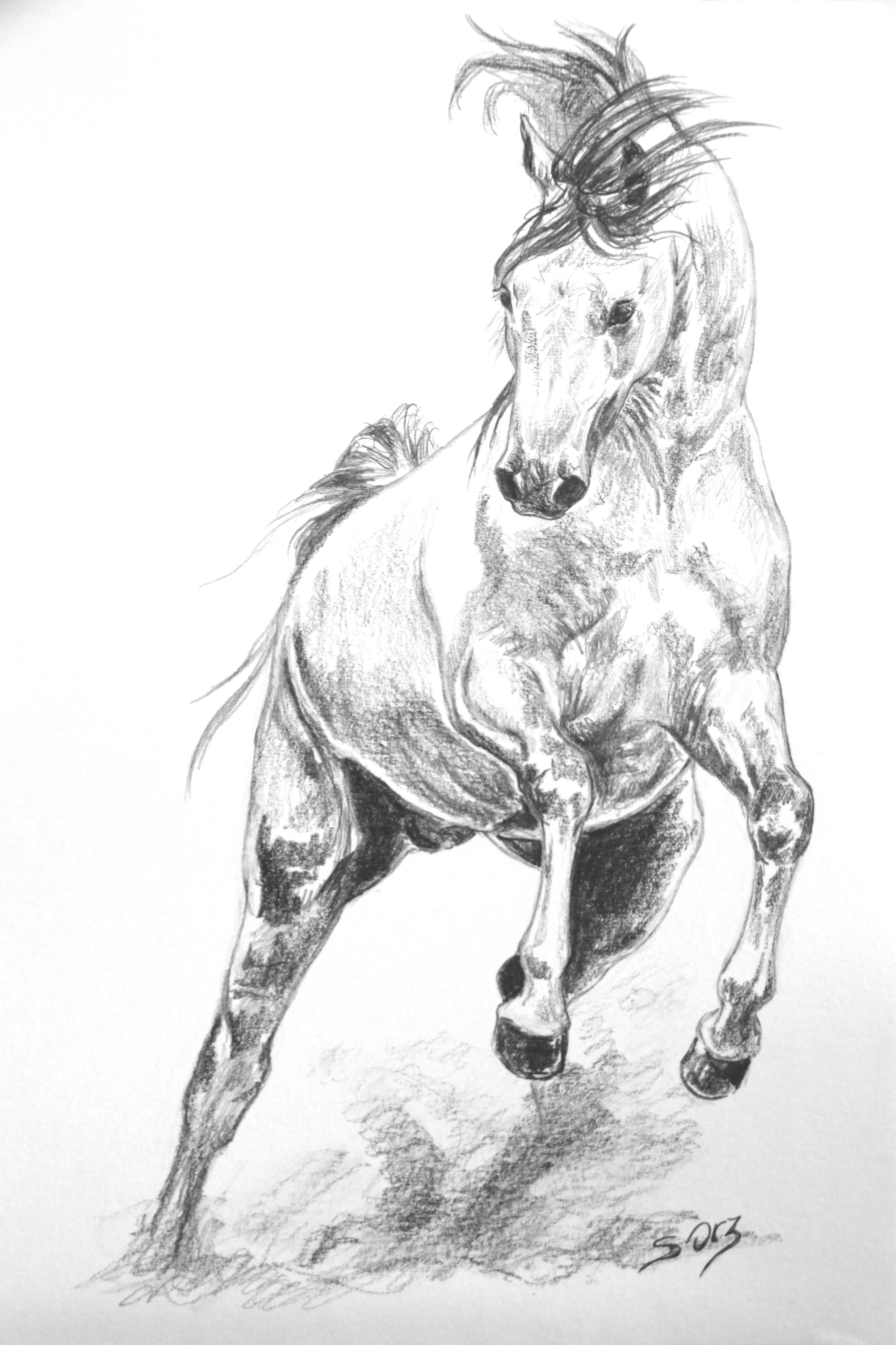 Horses drawings in pencil step by step - photo#26