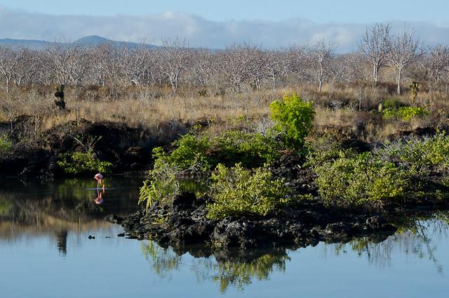 Galapagos: North Santa Cruz Island