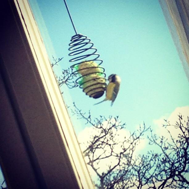 Äntligen!! Pippifåglarna har hittat min mat!