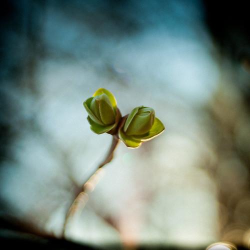 [フリー画像素材] 花・植物, 芽 ID:201303180600